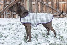 Pet Coat