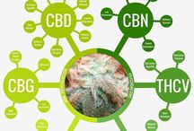 CBD/THC/CANNABINOID Science