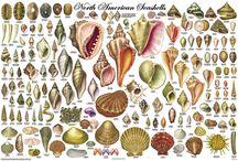 Stworzenia Morskie i Rzeczne