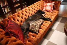 Living Room Ideas / by Mandy Ahr