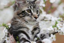 állatok, cicák