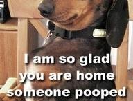 Funny! / by Rebecca Yaseniuk