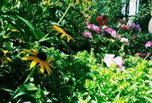 in the shadow of the gardener