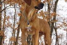 Ridgebacks / by Randi Warmath