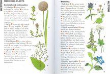 Infografics plants