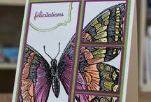 Card Ideas - SU Butterflies / by Lisa Gundrum