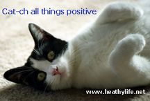Capitivating Cats! / HealthyLife.net Radio's fun Cat Campaign