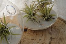 air plants,mosses and ferns / by ruth mead