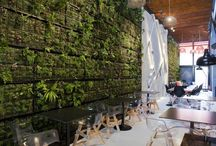 plants walls in interiors