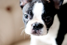 precious puppies  / by Kassidy Wynne