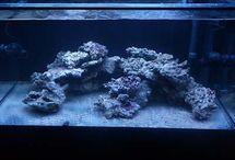 Reef Aquascaping