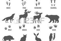 Animal info for children