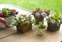 Miniature Garden Pots & Containers