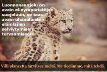 Yhdessä eläinten asialla / WERA - Ruohonjuuritason toimintaa eläinten hyväksi. Seuraa myös WERAn blogia osoitteessa werablogi.blogspot.fi