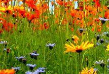 PLANTING WILD FLOWER