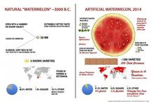 Melon health information / Melon nutritional information