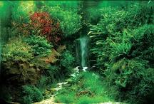Favourite Planted Aquariums / A collection of amazing planted aquarium tanks.