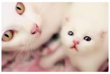 Cats eye / by Stephanie Blaylock