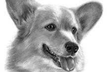 Gatos y perros / animals
