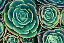 liście i rośliny