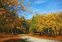 Parki krajobrazowe, parki miejskie /  landscape parks / Parki.