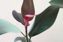 Green / Minimalistyczne piękno roślin