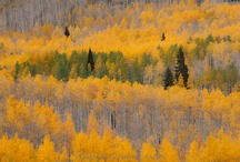 fall in crested butte