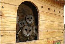 Nests!