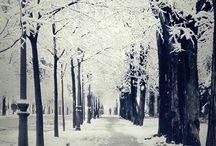 Winter Wonderland / by Hello|Claire
