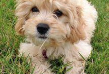 So cute dog