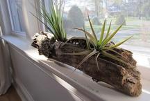 Decord plante