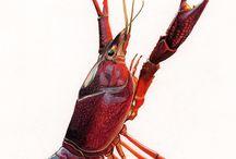 Rak crawfish