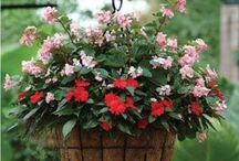 Hanging Baskets / Hanging Baskets are the perfect addition to any garden and home.