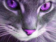 GREY & purple...