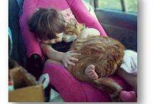 Οι φίλοι μου τα ζώα