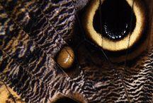 Kelebekler-butterfly-ants