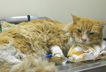 Cat Rescue / Pins related to animal rescue, mainly cats / by Maine Coon Adoptions