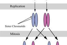 Biology - genetics.