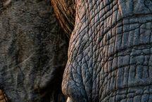 Camp Jabulani Ranger Photos / A showcase of Camp Jabulani's Ranger photographs. These were all taken at Kapama Private Game Reserve and Camp Jabulani #WildlifePhotography #Safari #Big5