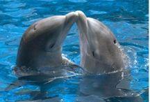 73. Dolfijnen / Zeezoogdieren