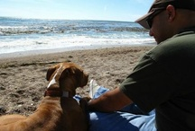 Pet Friendly Vacations / by Seattle DogSpot
