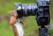 animali fotografi