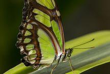 Butterflies  / by Gaby Vanessa Saldaña