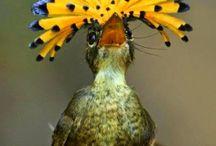 Bird hats / Bird hats