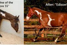 Týraná a zanedbaná zvířata - proměny
