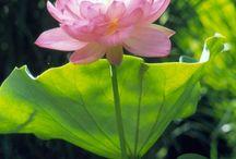 Water plante en ideas