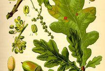 botànica