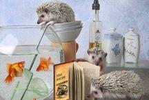 Hedgehog/Igel / sooooo sweet!!!!!!!!!!!