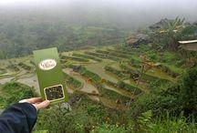 Herbata ciekawa świata w Wietnamie