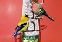 Decorative Solar Lights, Some for the Birds! / Some solar lights provide very strong light, particularly solar lamps, spotlights and floodlights. Others are more decorative, but are a great way to add style and ambient light to walkways, patios and more.  And, some are strictly for the birds!